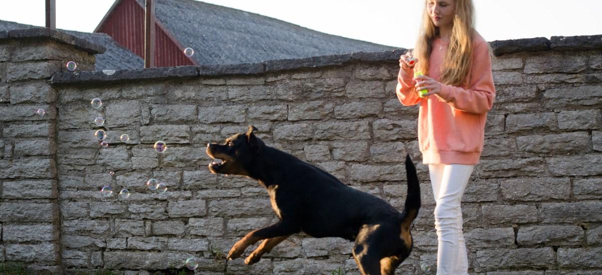 Hundskola för barn start 30 maj