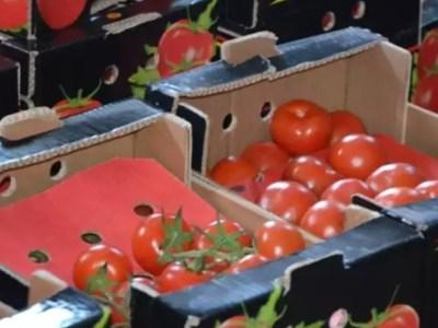 В Оренбуржье санкционные турецкие помидоры переработали в биотопливо