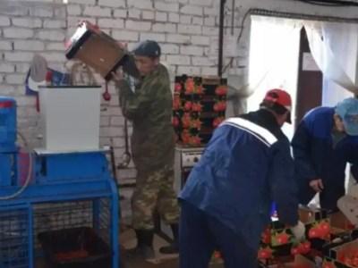 РИА Новости: В Оренбурге турецкие помидоры и польские яблоки стали сырьем для биотоплива