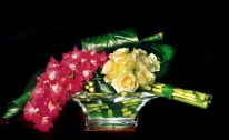 Rangkaian Bunga Eden (43)