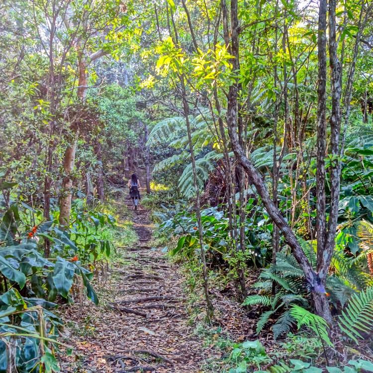 Kona Cloud Forest Sanctuary / Kona / KonaNature.com / 1-844-566-2628