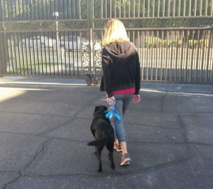 Dog Walking Tips for Tempe AZ