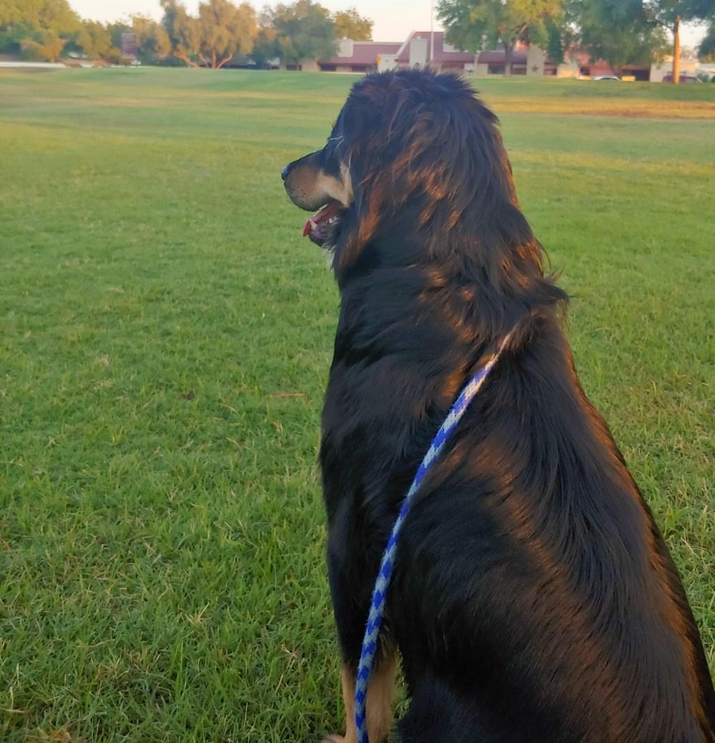 German Shepherd Mix Dog Training for Tempe, AZ