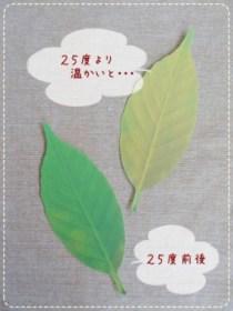 20120925_1504617[1]