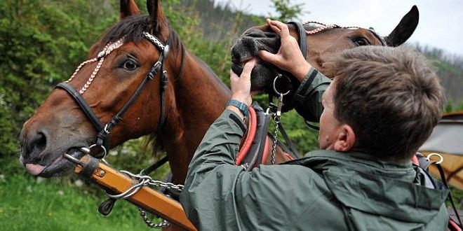 Badania 2015: Wstępne wyniki z dwóch tur okresowych badań stanu zdrowia koni