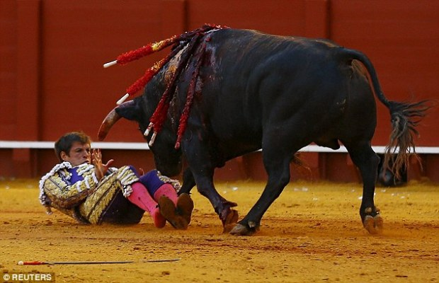 33380f8c00000578-3543074-lopez_who_is_a_well_known_figure_in_the_bullfighting_world_fell_-a-22_1460795589756