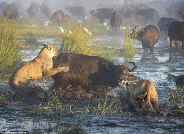 3383bede00000578-0-pic_by_wim_van_den_heever_caters_news_pictured_10_of_20_pics_two-m-46_1461575016519