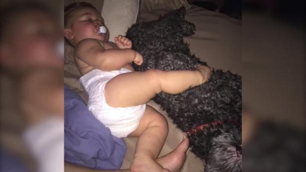 Polo the family pet dog gave his life protecting an 8-month-old vivian from a fire late Sunday..jpg