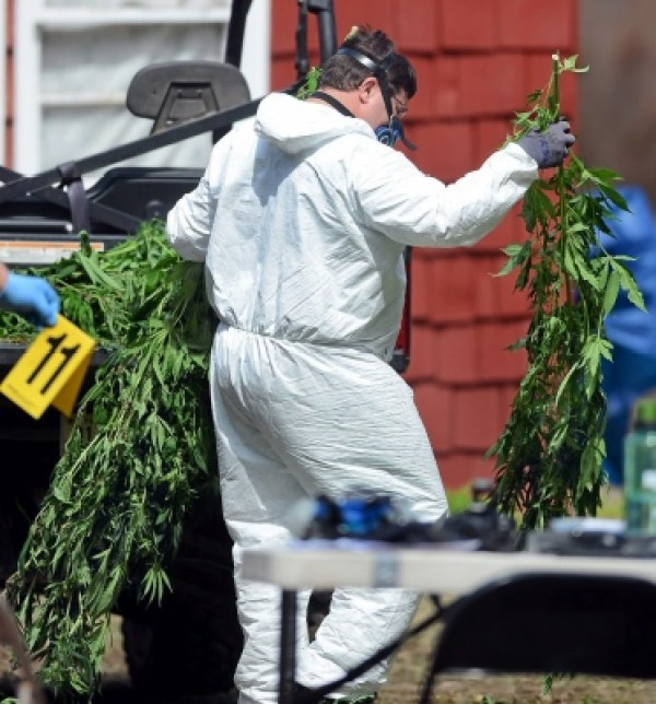Police remove cannabies from the home