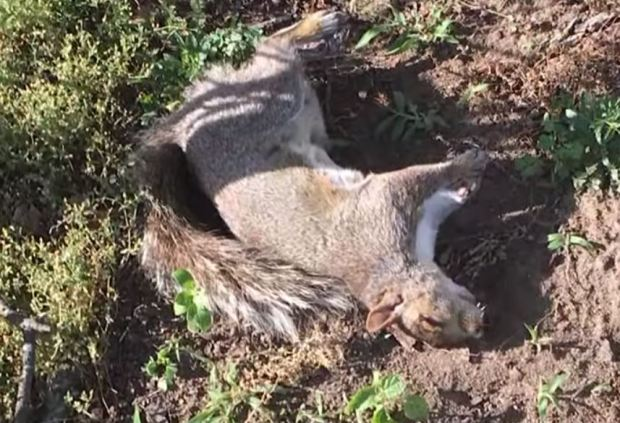 Jennifer McLeggan said her neighbor threw a dead squirrel into her property 2