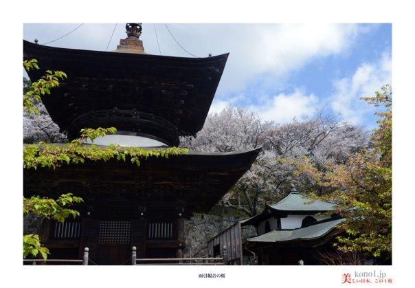 雨引観音の桜05