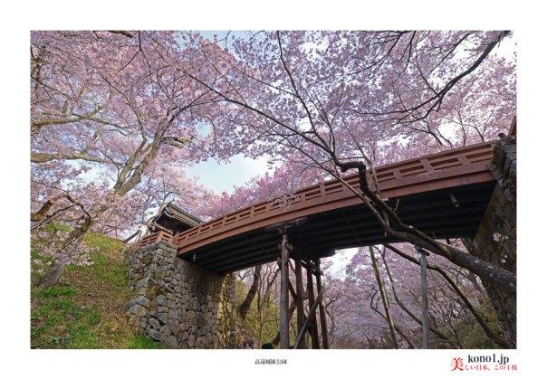 高遠城趾公園桜2_03