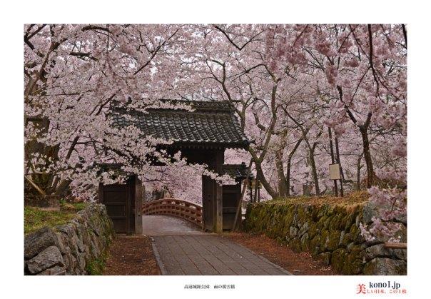 高遠城趾桜02