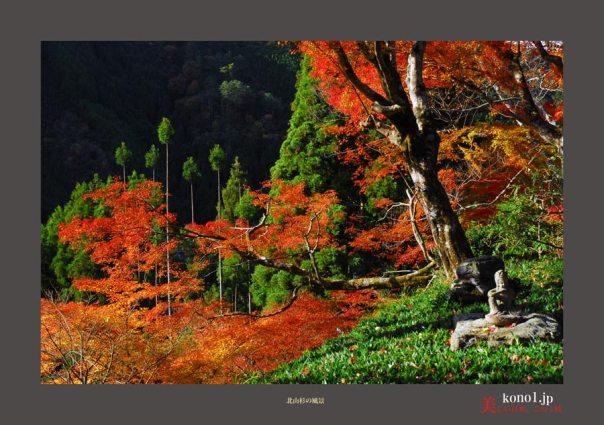 北山杉の風景02