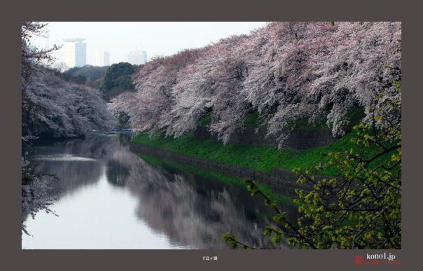 千鳥が淵桜05