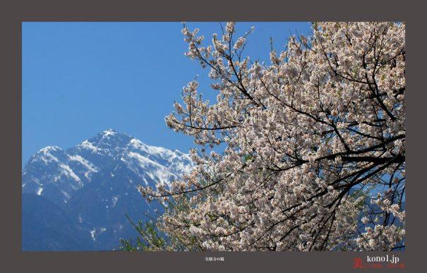 山高神代桜04