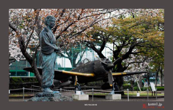 知覧平和公園の桜04