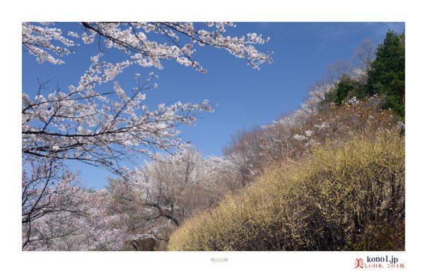 藤岡市桜山公園07