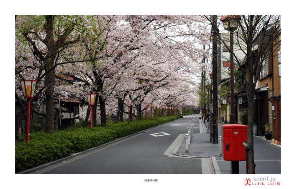 高瀬川桜02