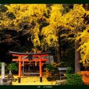 ブログ 京都 岩戸秋葉神社 紅葉 黄葉 銀杏 ライトアップ