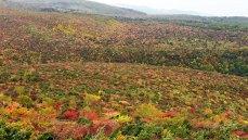 壁紙 安達太良山 紅葉