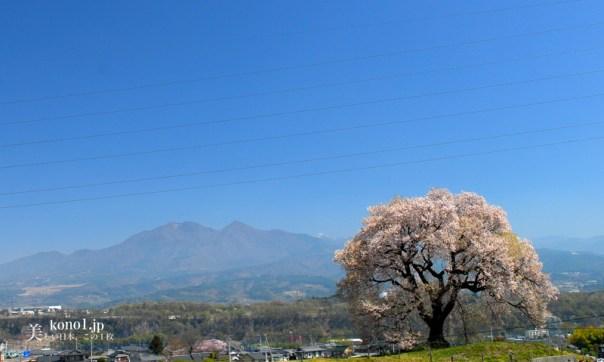 山梨県韮崎市 わに塚の一本桜