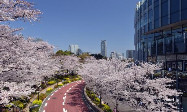 東京都 東京ミッドタウン 桜 ブリッジ 公園