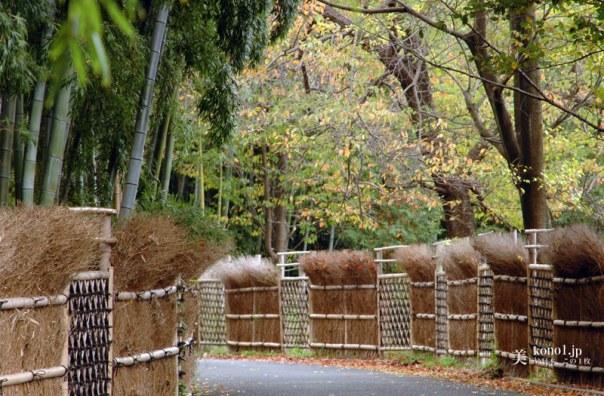 京都 向日市 竹の径 竹の道