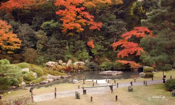 京都市 青蓮院 紅葉 夜景