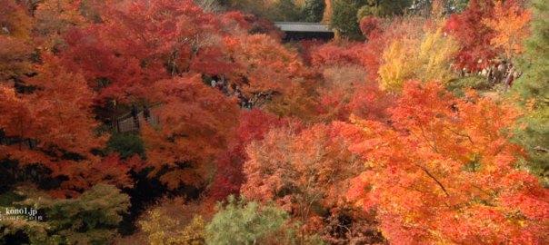 京都市東山区 東福寺 紅葉 京都屈指 絶景 通天橋