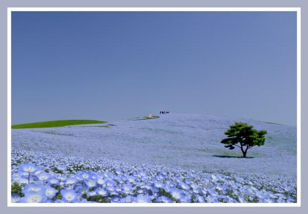 個展PR用_青い丘の結婚式