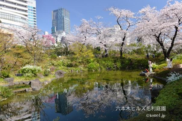 東京都の桜開花情報 地図一覧 六本木 毛利庭園