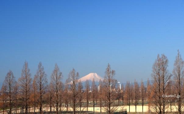 大宮健保グラウンド メタセコイヤ 富士山