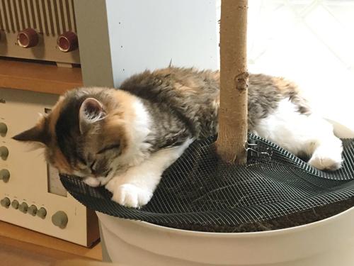 猫と鉢底ネットの植木用カバー