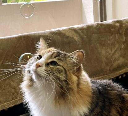 シャボン玉と猫