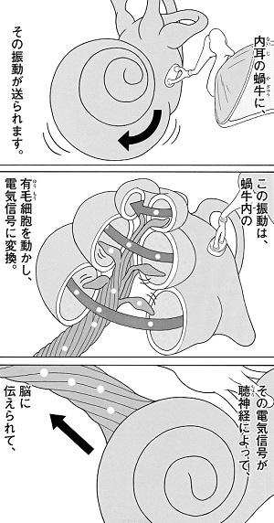 至極ていねいに描かれる聴覚のシステム。しかし、音の伝達と個々の「聴こえ」には大きな差があるという。