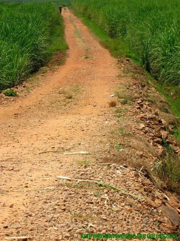 Inne ujęcie drogi z pierwszego zdjęcia
