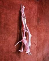 Romeu, 'my deer' by Berlinde de Bruyckere