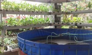 aerator untuk kolam