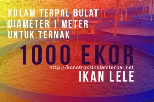 kolam terpal diameter 1 meter untuk 1000 ekor ikan lele