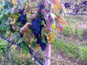 wineasia66