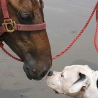 Kvindelig besøgsven - til glad kvinde på 40 år med interesse for hunde og heste...