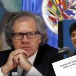 Difunden el contrainforme que refuta a la OEA y demuestra que Evo Morales ganó en primera vuelta