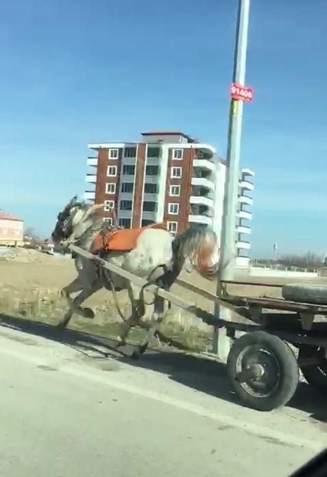 Konya'da başıboş at trafikte tehlike saçtı