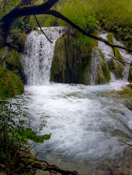 Amazing waterfalls in Plitvice Lakes National Park together with moss and other organisms and plants