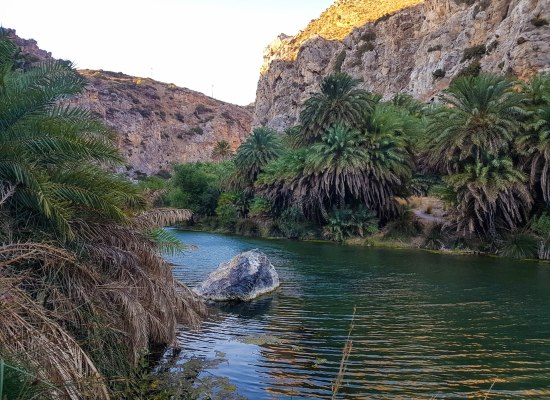 Palm trees in Preveli beach in Crete island