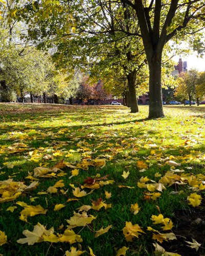 Autumn in Glasgow