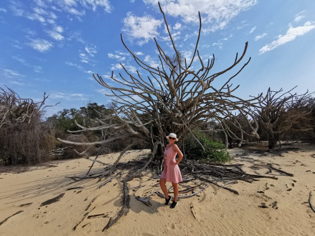 Octopus tree on Madagascar and a girl