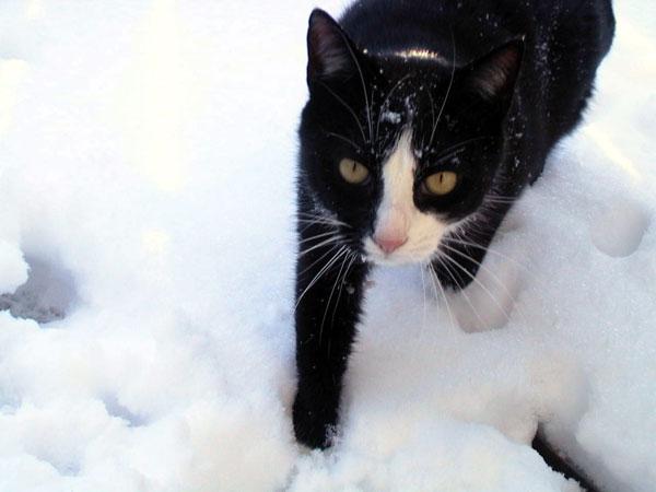 snow-pook
