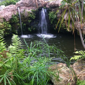 Tropical World: pond